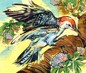 Jaqui Oakley woodpecker illustration