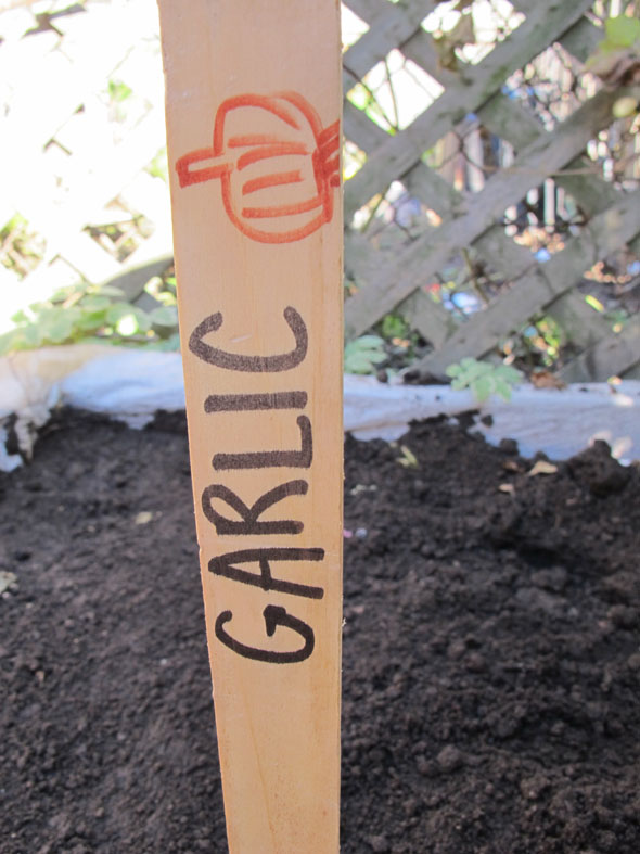 planting garlic mid fall, garlic stick marker for garden