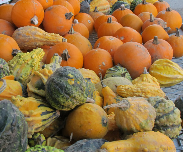 gourds, Punch Bowl Country Market, 136 Ridge Road, Stoney Creek