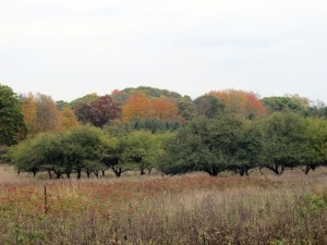 dundas conservation apple orchard