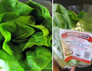 organic living boston lettuce