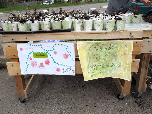 mustard seed spring seed sale strawberries