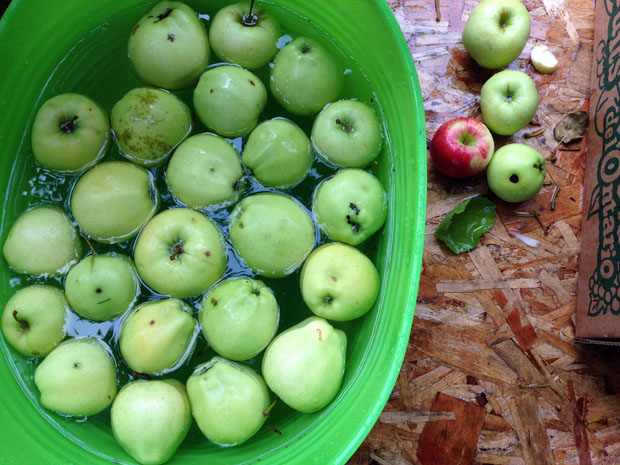 green fall apples for cider
